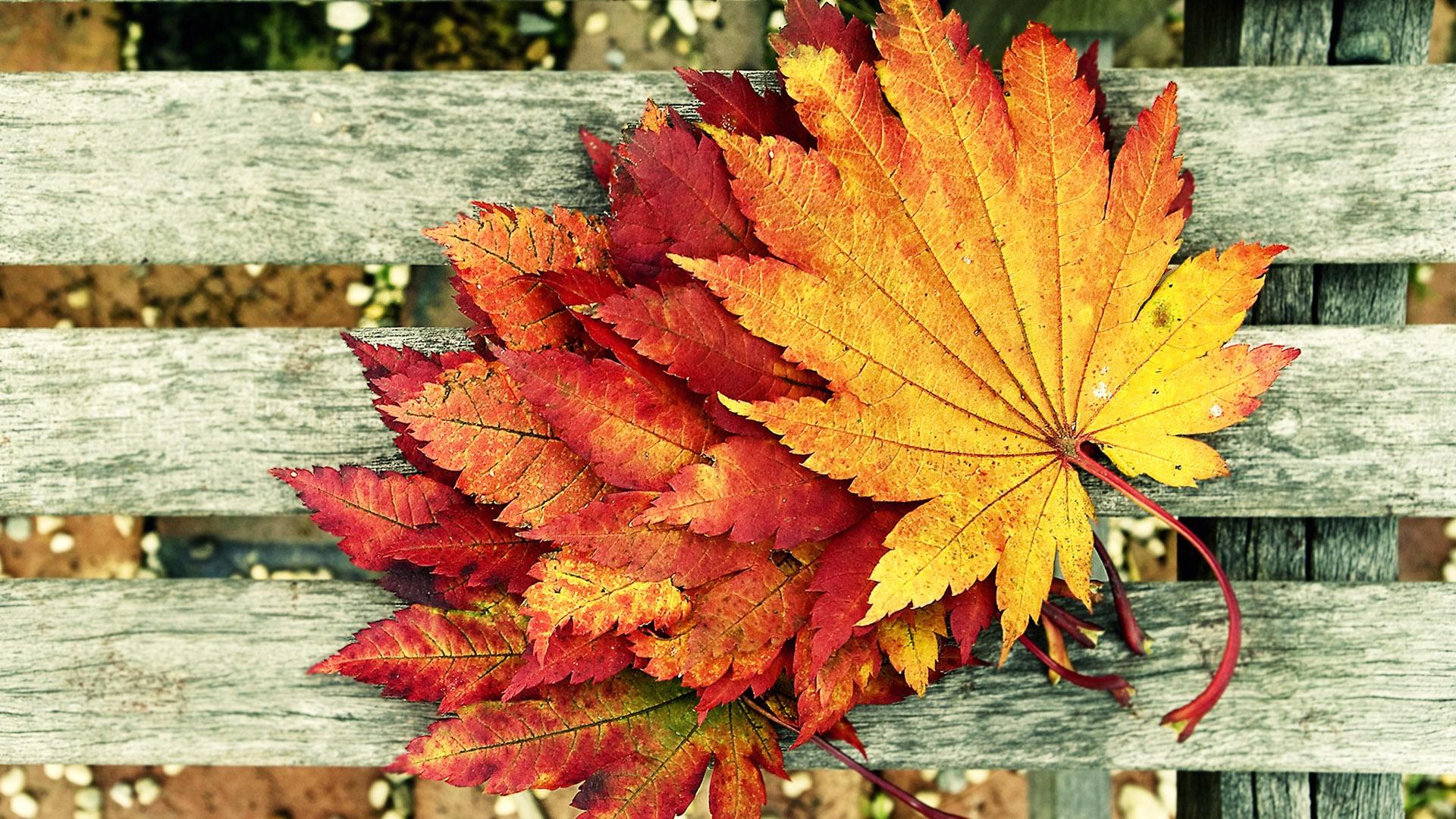 Autumn Living In Harmony With The Seasons Angea Com Au
