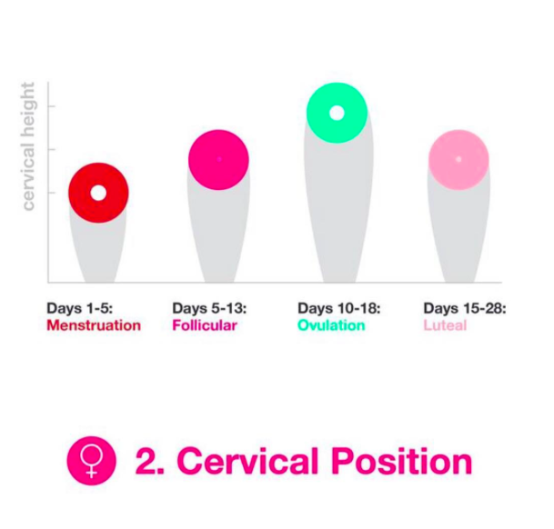 Cervical Position