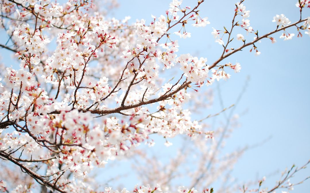 SPRING – Living in harmony with the seasons and Chinese Medicine