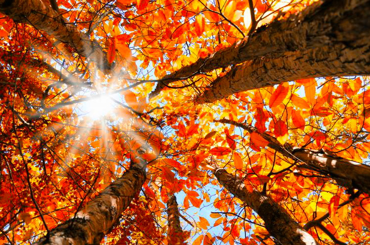 AUTUMN | Living in Harmony with the Seasons